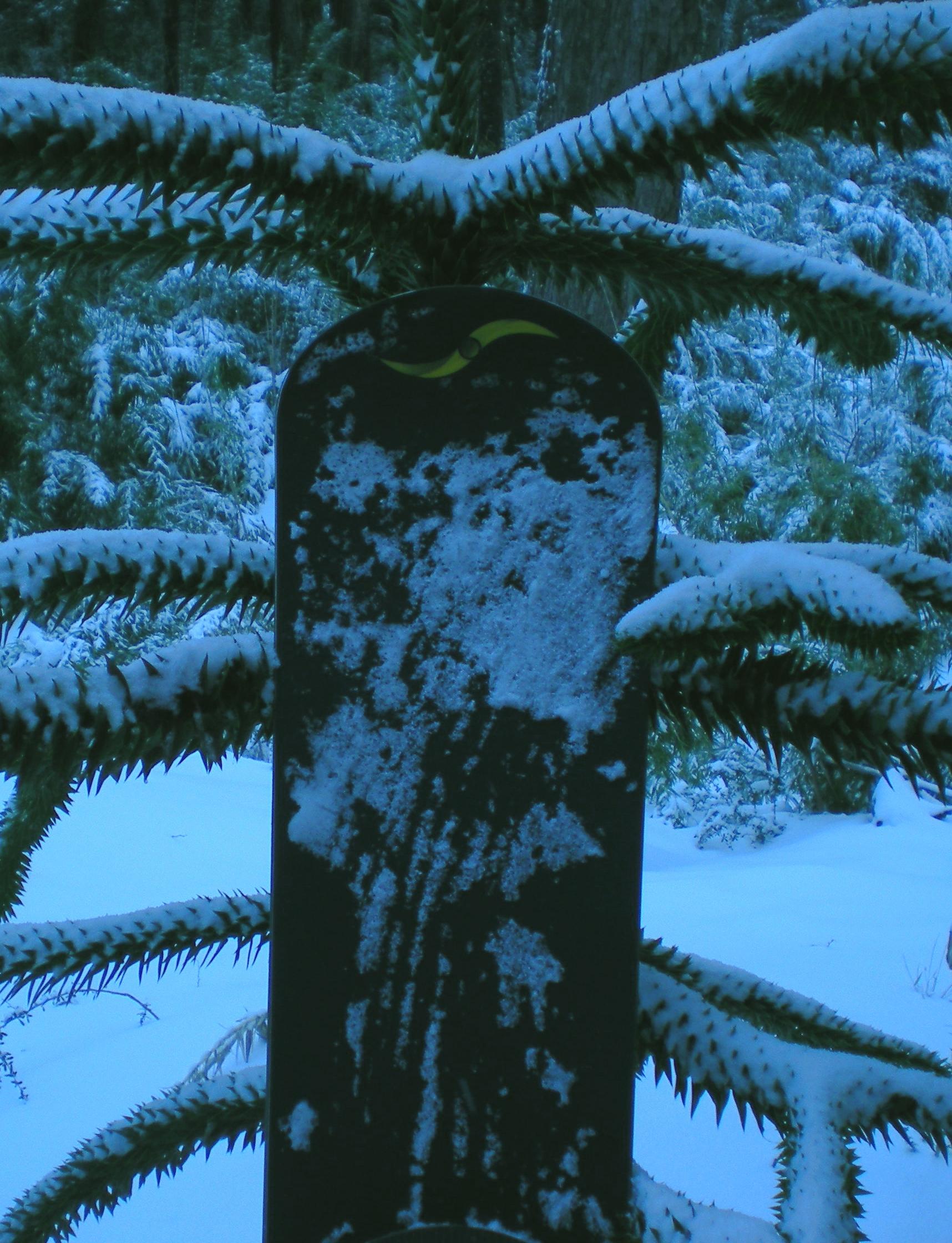 cypress crop